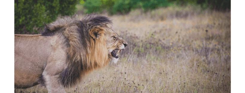 Run Towards The Roar